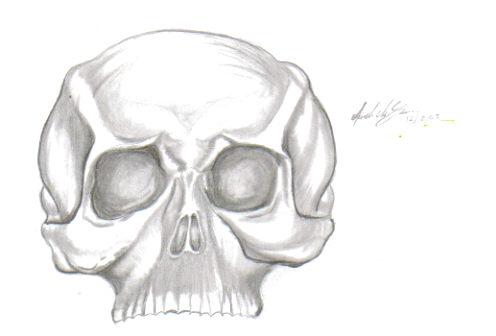 Skull by Jenovatra