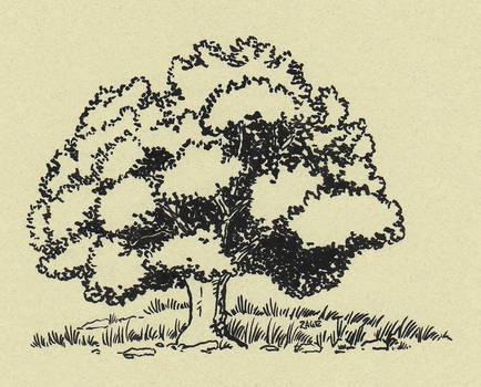 Black oak tree by Zage56
