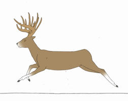 Running Deer Animation -Completed-   KutkuMegsan by KutkuMegsan