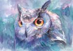 Illusive Owl
