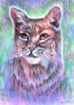 Whimsical Bobcat