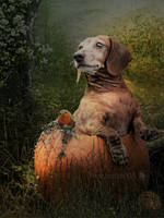 Pumpkin by refro