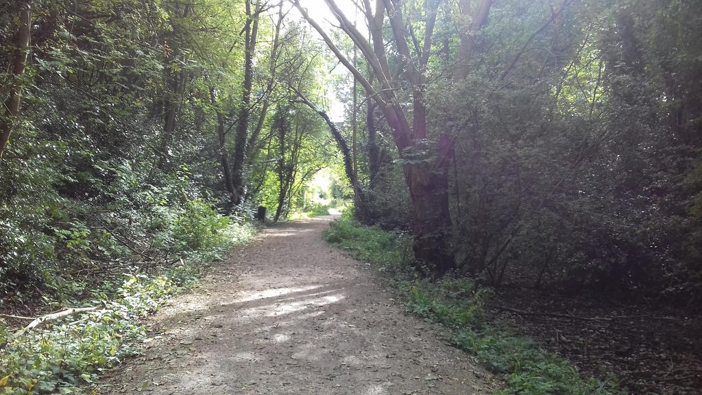 Trail by Boo-Bottle