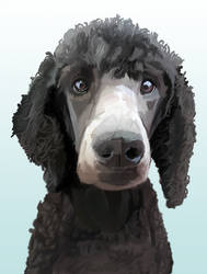 Wade the Poodle