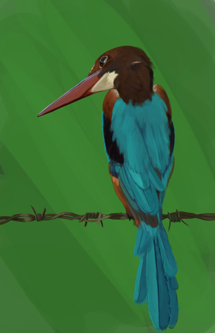 Kingfisher by Luherc