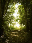 Premade Forest