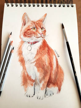 cat watercolor study