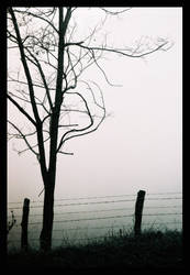 Fencing off the Fog by Naivetee