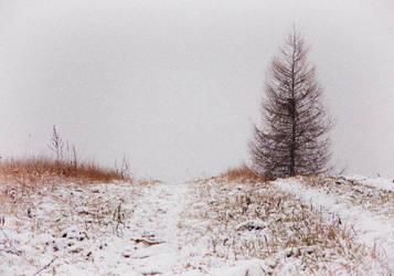 Salix by Mateusz78
