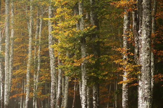 Autumn Fading