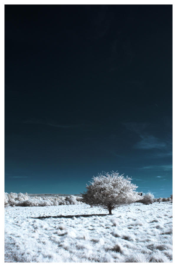 Winter.. by Roman89