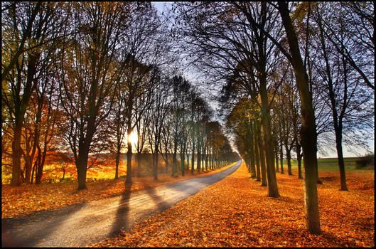 Colors of Fall II