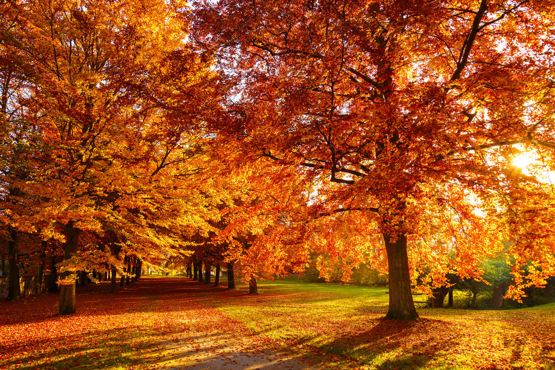 Beautiful autumn by Roman89