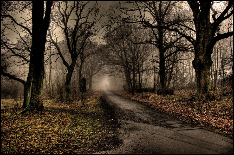 foggy forest by a - photo #14