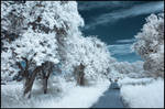 Snow? by Roman89