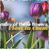 http://fc01.deviantart.net/fs70/f/2011/187/3/9/spring_4_by_fallingglass-d3l62fo.png