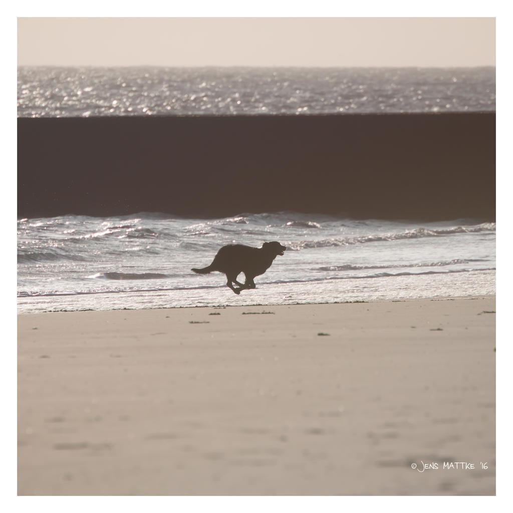 Flying Beach Dog