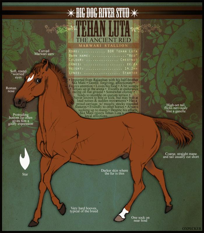 Tehan Luta by oxpecker