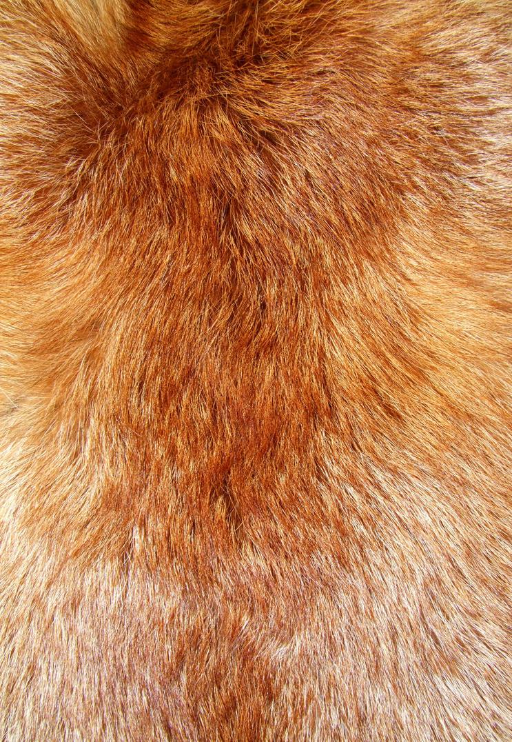 red fox fur nebula - photo #30