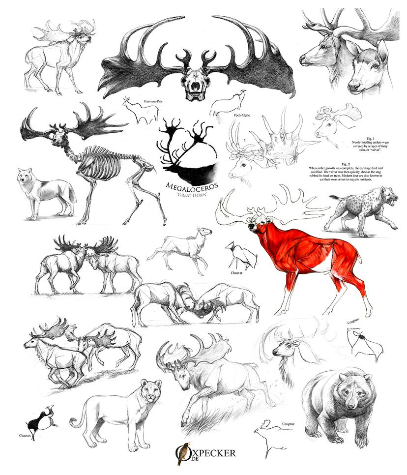 Megaloceros giganteus (Irish elk) sketch dump by oxpecker