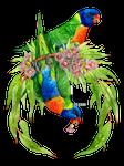 Rainbow Lorikeet Wreath