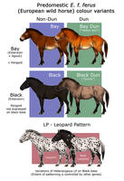 European Wild Horse Colouration
