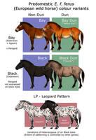 European Wild Horse Colouration by oxpecker