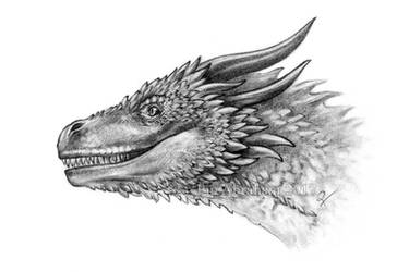 Viserion by oxpecker
