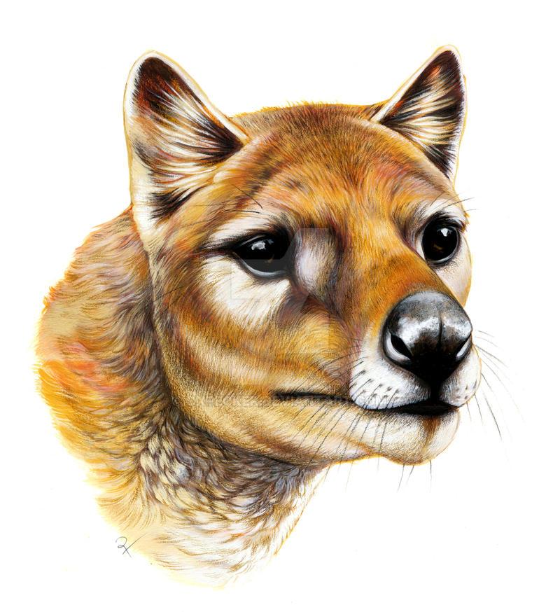 thylacine portrait by oxpecker on deviantart