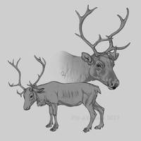 Reindeer cows by oxpecker