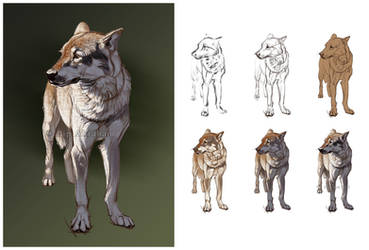 Wolf with process steps by oxpecker