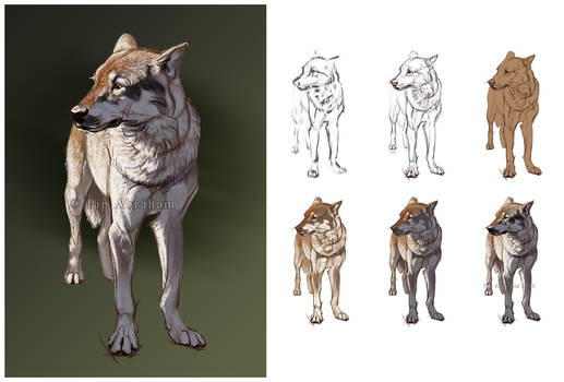 Wolf with process steps