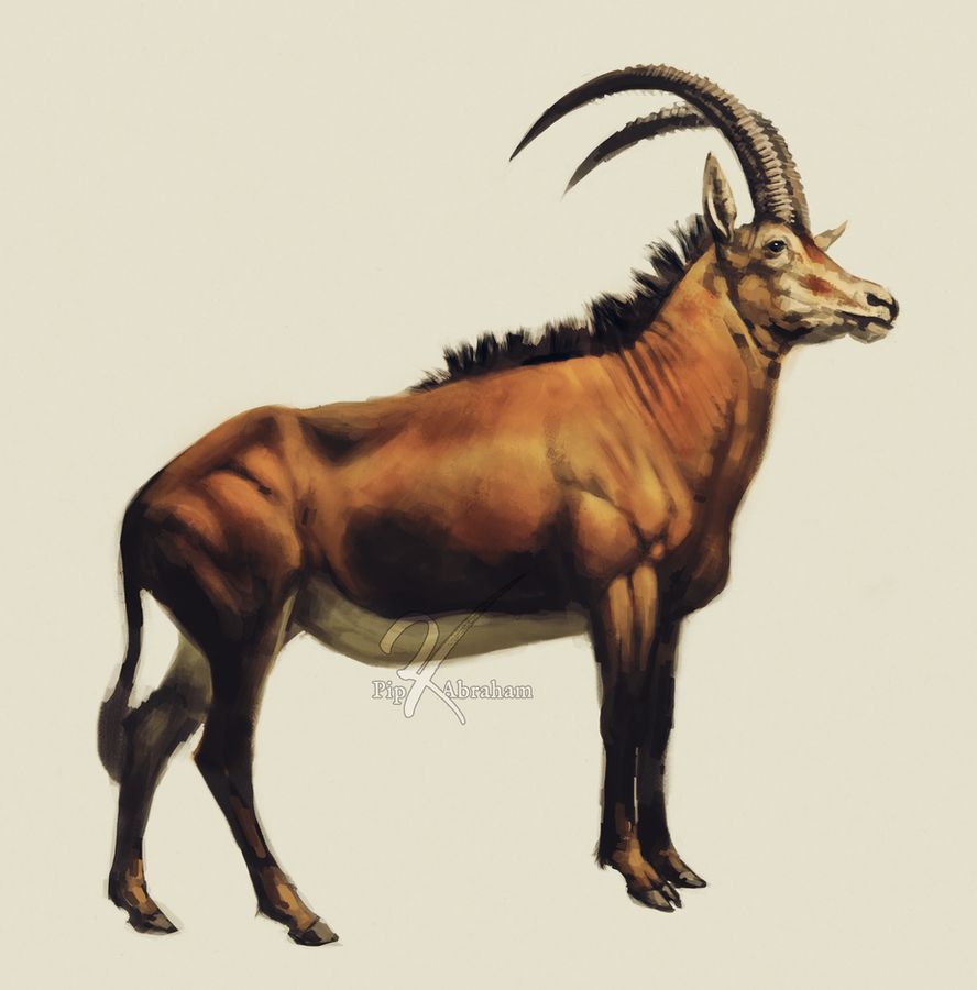 Sable Antelope By Oxpecker On DeviantArt