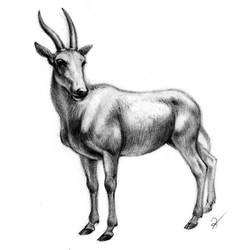 Eland sketch by oxpecker