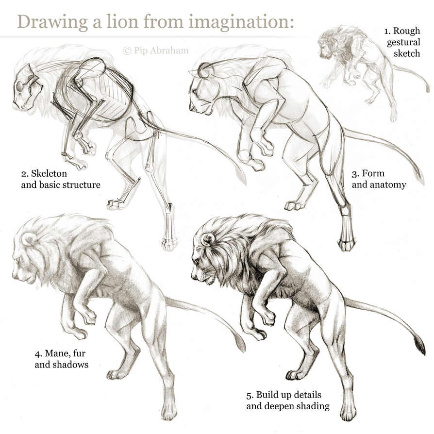 Tutorial Drawing A Lion From Imagination By Oxpecker On Deviantart