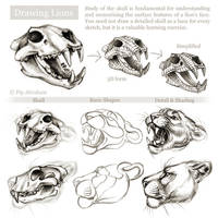 Tutorial: Drawing the head and face of a lion