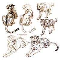 <b>Tiger Sketches</b><br><i>oxpecker</i>