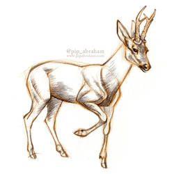 DrawDeercember day 7: Roe deer by oxpecker