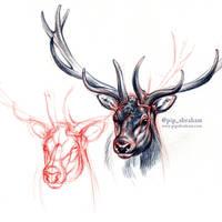 DrawDeercember day 9: Elk / Wapiti by oxpecker