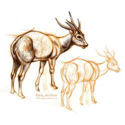 DrawDeercember day 10: Visayan spotted deer