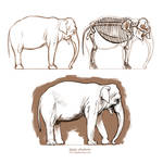 Anatomy study - Asian elephant by oxpecker