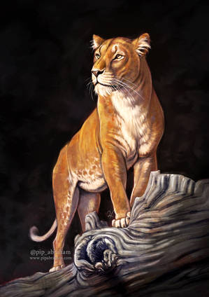 Golden Lioness by oxpecker