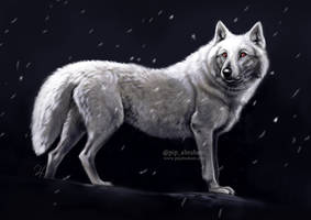 Game of Thrones: Ghost by oxpecker