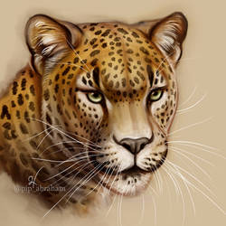 Leopard study by oxpecker