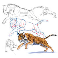 Tiger sketch process