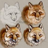 #Draw30Animals 1: Fluffy - Fox