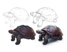 #Draw30Animals 5: Old - Galapagos tortoise