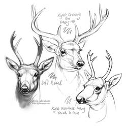#Draw30Animals 6: Antlers - White-tailed Deer