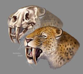 #Draw30Animals 8: Teeth - Smilodon