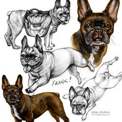Pet Portrait: Frank the Frenchton